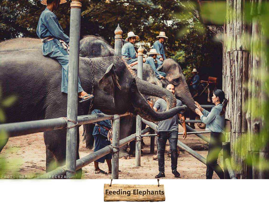 02-feeding-elephants