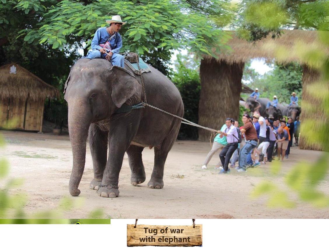 06with-elephant