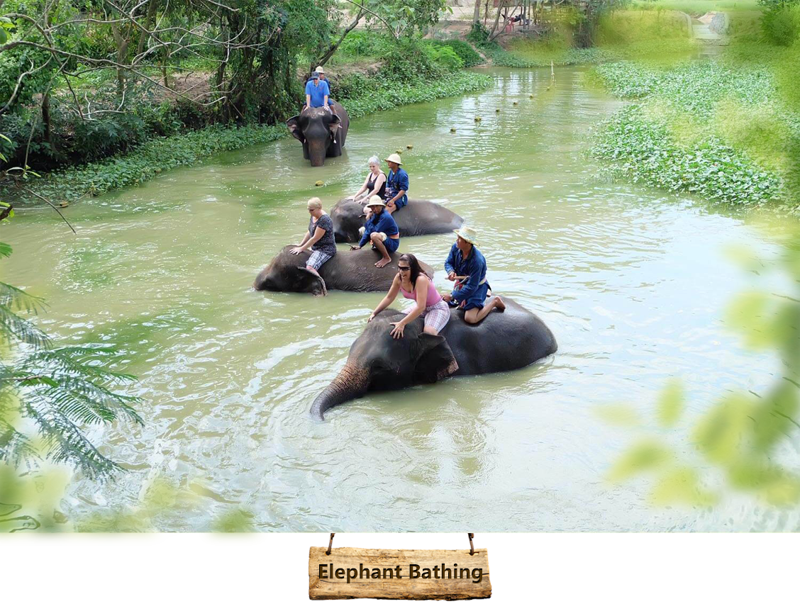 elephant-bathing01
