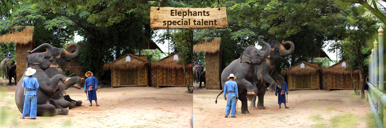 elephant-special-talent