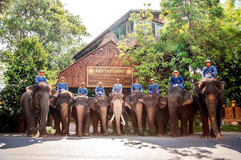Kết quả hình ảnh cho pattaya elephant village