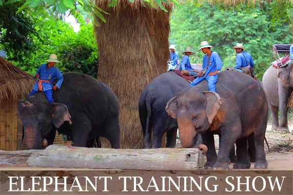 ELEPHANT TRAINING SHOW 2