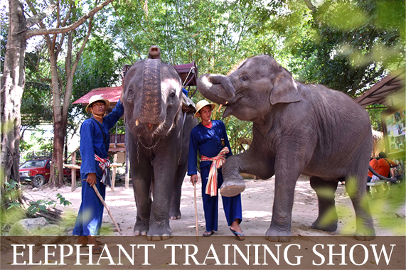 elephant-training-show