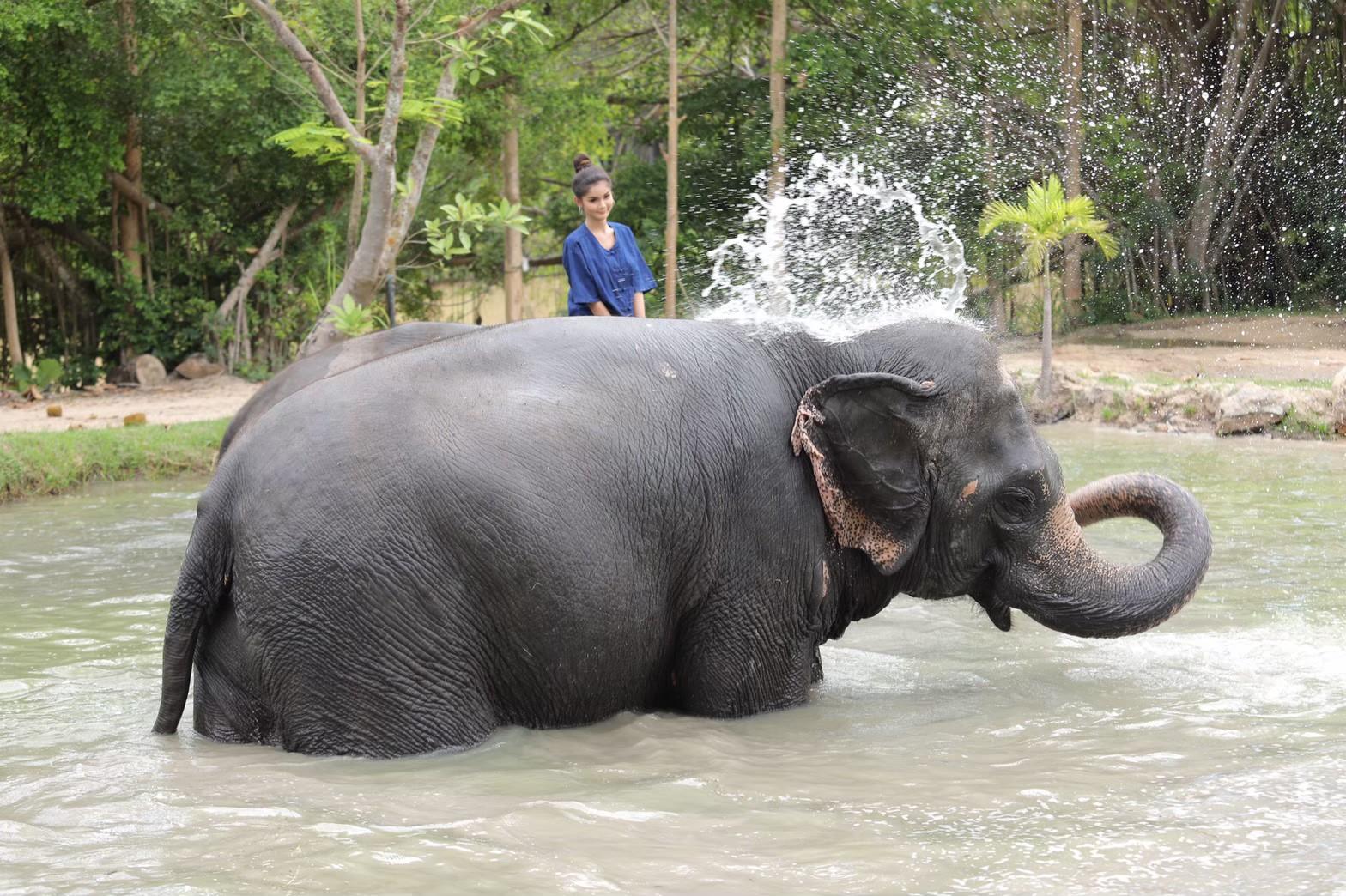 อาบน้ำกับช้าง_200103_0011